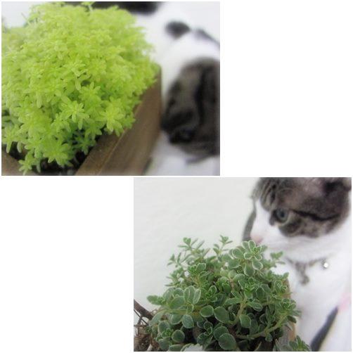 cats_2014031018324330f.jpg