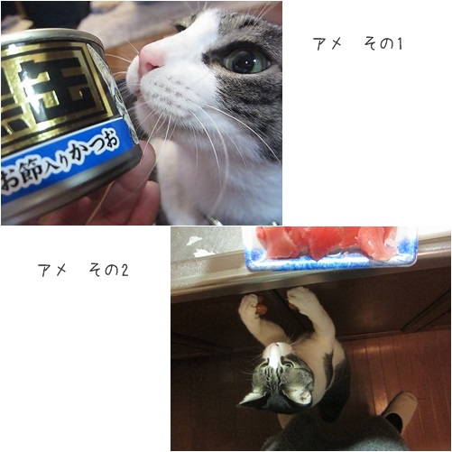 cats_20140320150931891.jpg