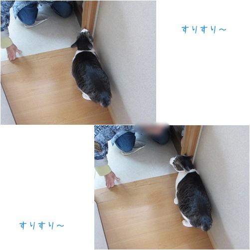 cats_20140322000003ab8.jpg