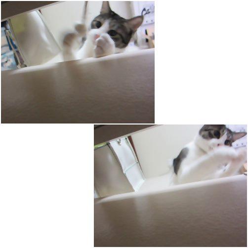 cats_20140324185017fc7.jpg