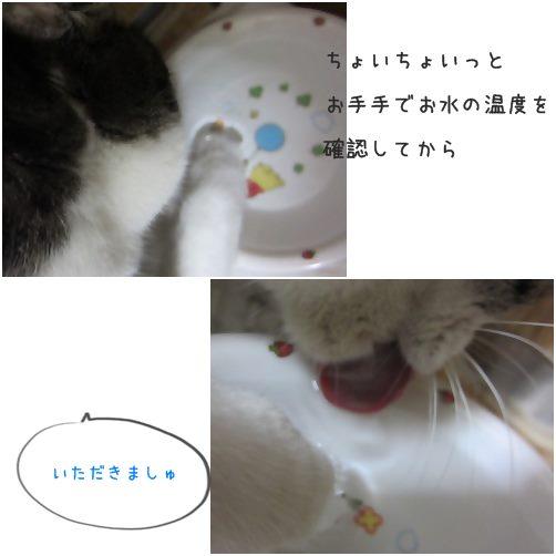 cats_20140326190545d45.jpg