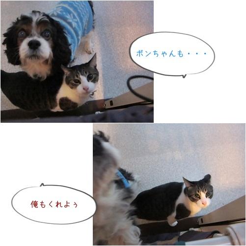 cats_20140401192444cea.jpg