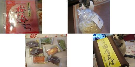 cats_201404041738527c1.jpg
