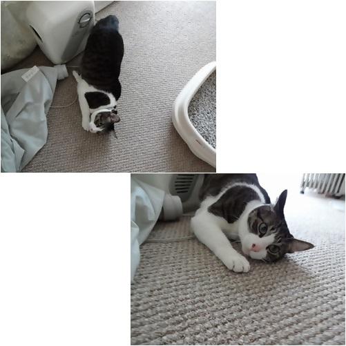 cats_20140404183535413.jpg