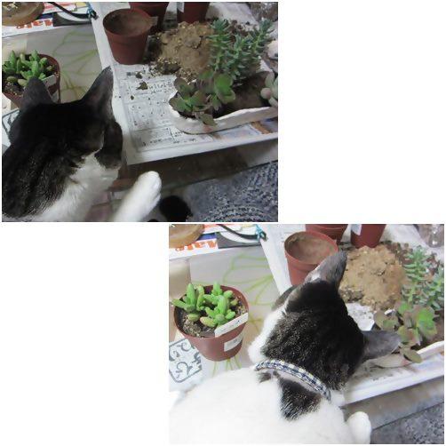 cats_20140407202150b6f.jpg