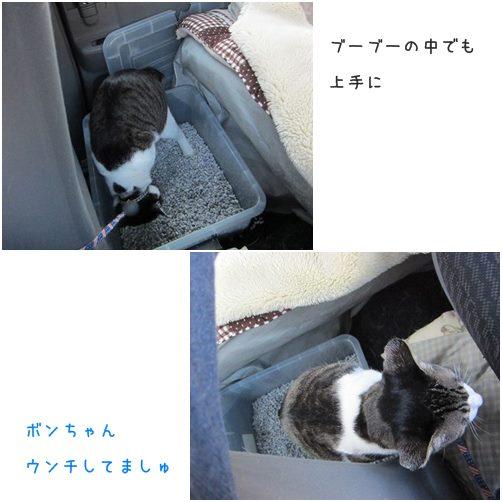 cats_20140408232150b1f.jpg