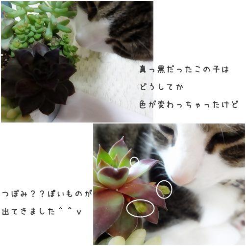 cats_201404131646527c7.jpg