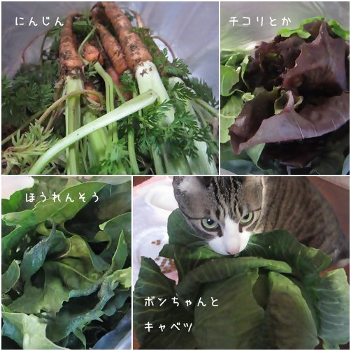 cats_201404141954291bc.jpg