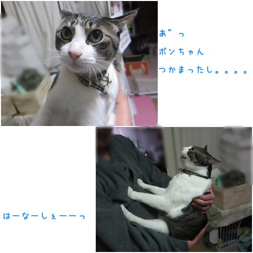cats_20140418204359577.jpg