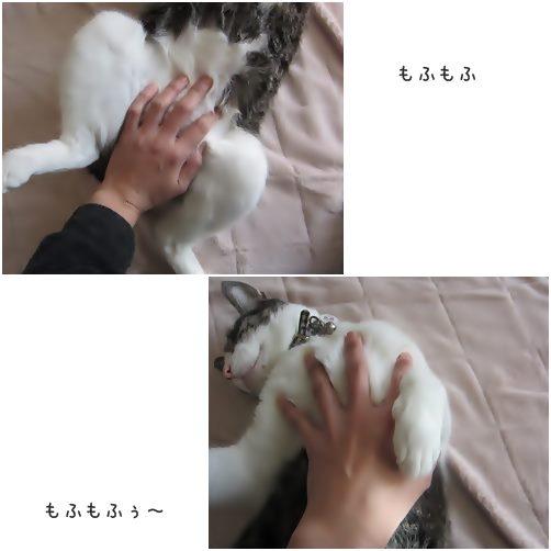 cats_20140418210241f84.jpg