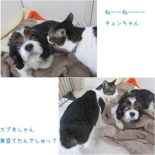 cats_20140421134531cd1.jpg