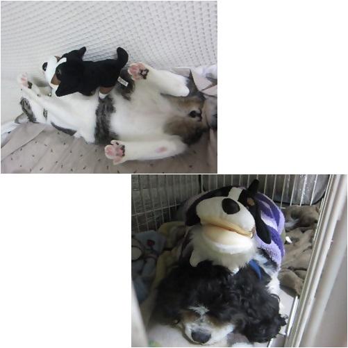 cats_20140423183407b8e.jpg