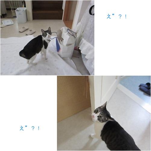 cats_201404251559073b0.jpg