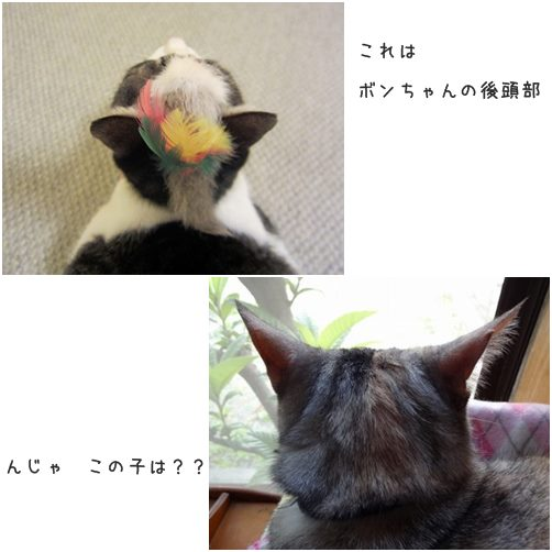 cats_201404282030363a6.jpg