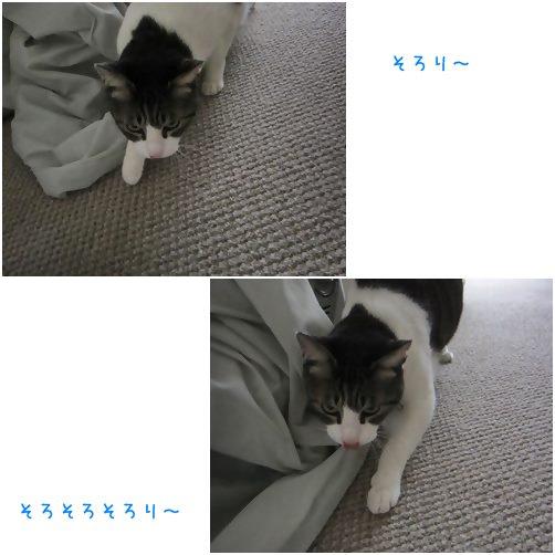 cats_20140429191706d09.jpg