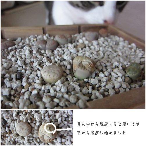 cats_201405072330225d9.jpg
