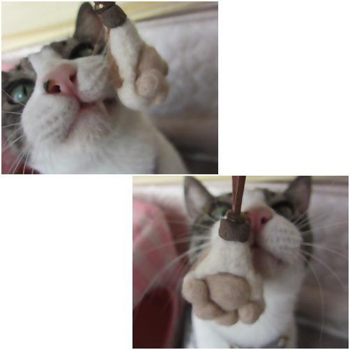 cats_2014051319185297d.jpg