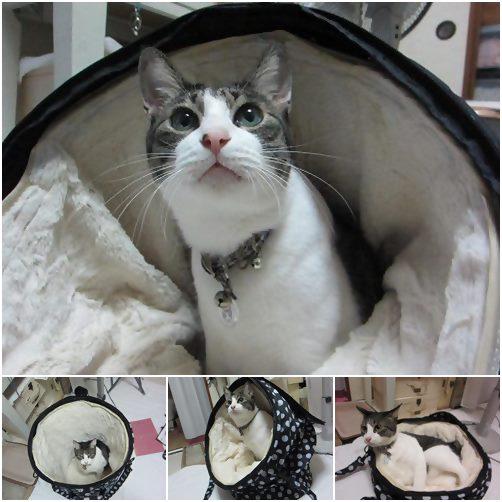 cats_20140516210558ce7.jpg