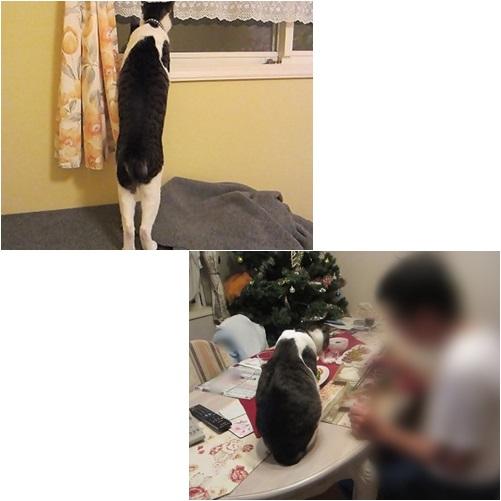 cats_201405202044382c7.jpg