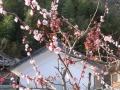 民宿「花水木」5