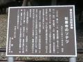 日本一のソテツ