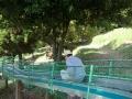 一本松公園6