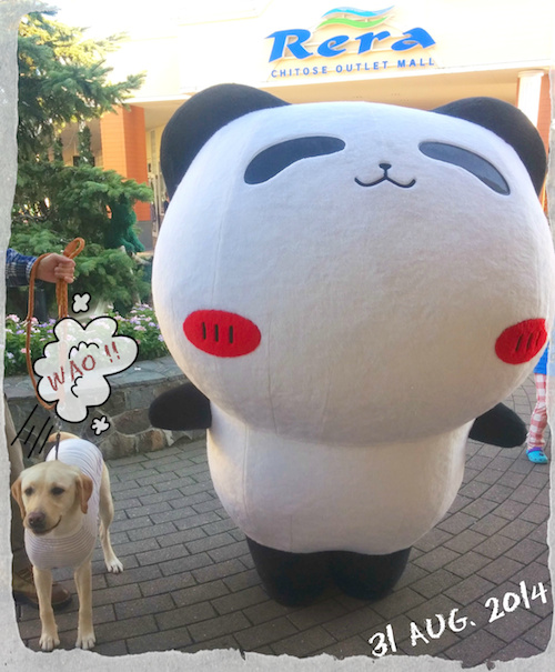 20140831_panda-small.jpg