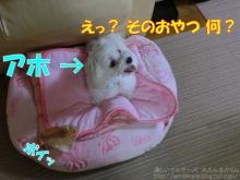 20140615_012.jpg
