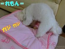 20140615_02.jpg