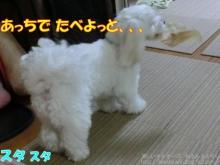 20140615_06.jpg