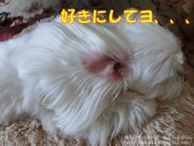 20140622_4.jpg