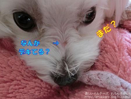 20140622_8.jpg