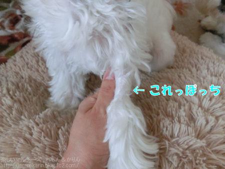 20140623_4.jpg