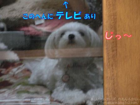 20140626_4.jpg