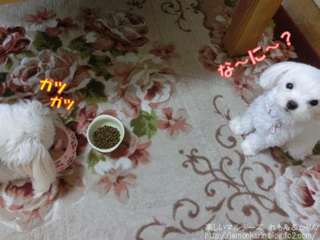 20140627_2.jpg