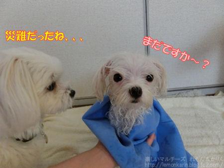 20140702_5.jpg