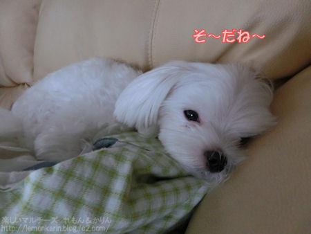20140705_5.jpg