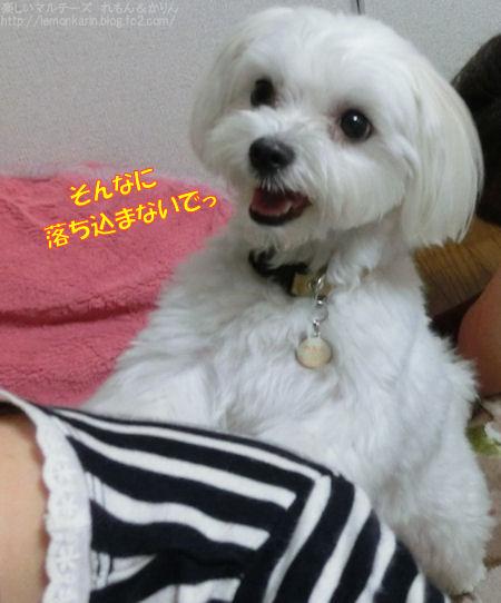 20140708_8.jpg