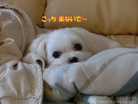 20140716_6.jpg
