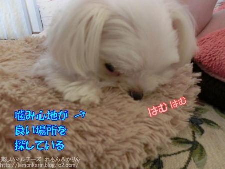 20140719_4.jpg