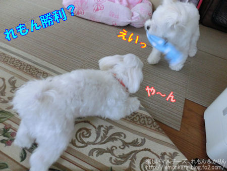 20140730_10.jpg