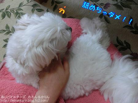 20140731_10.jpg