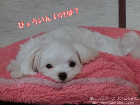 20140731_13.jpg