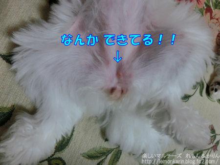 20140731_2.jpg