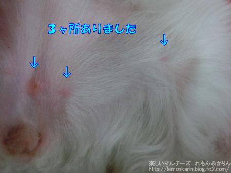 20140731_8.jpg