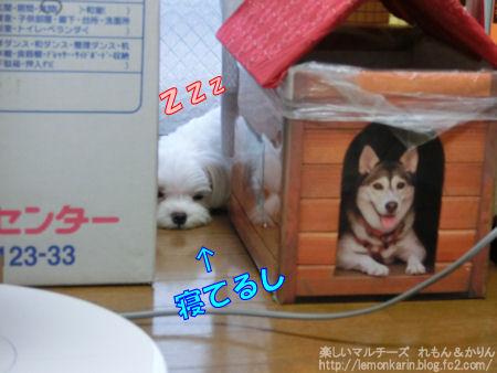 20140802_8.jpg