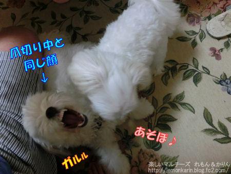 20140810_10.jpg