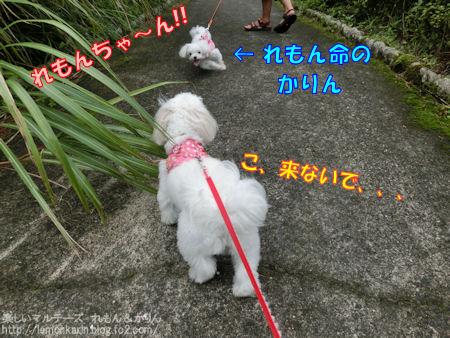 20140811_5.jpg