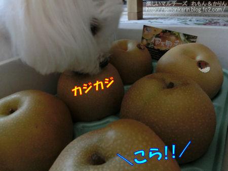 20140822_5.jpg