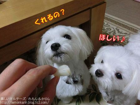 20140823_01.jpg